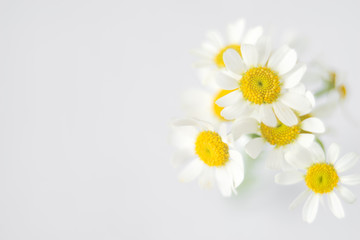 Fresh white chamomile flowers in soft and blur style. Flower background with copy space. Wall mural