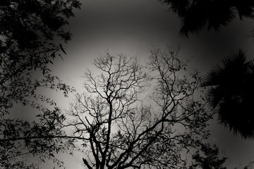 the silhouette image of some trees in a black and white frame.