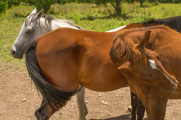 Unsociable Horse