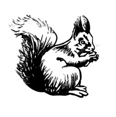 Squirrel. Stylized line drawing