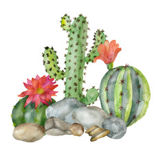 Watercolor composition of cacti and succulents on stones isolated on a white background. Color illustrations for your projects, greeting cards and invitations.
