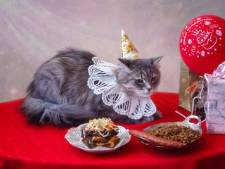 Pretty young kitty's birthday