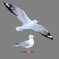 Realistic bird Seagull isolated on a grey background. Vector illustration of European Herring Gull.