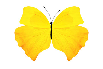 tropical yellow butterfly. isolated on white background