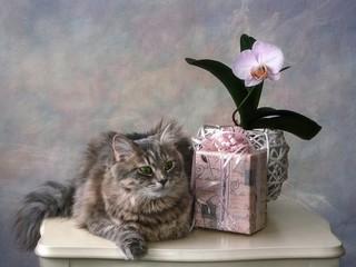Pretty kitty posing on the white table