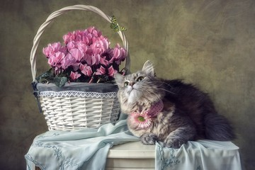 Still life with basket of primroses and pretty kitty