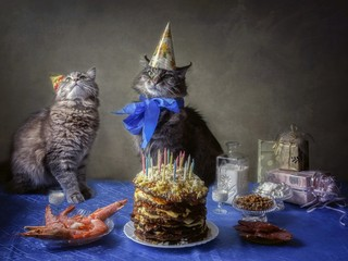 Very old cat's birthday