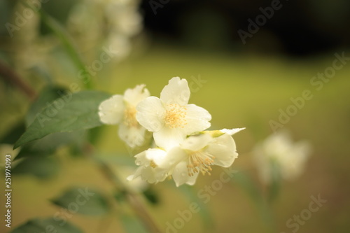 Fiore Darancio Con Sfondo Sfocato Stock Photo And Royalty Free