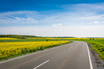 Landstraße mit Rapsfeld im Sommer