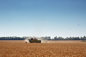 Wheat field, combine harvester & Fighter aircraft