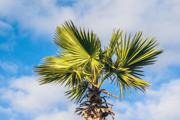 Photo of palm trees against the sky