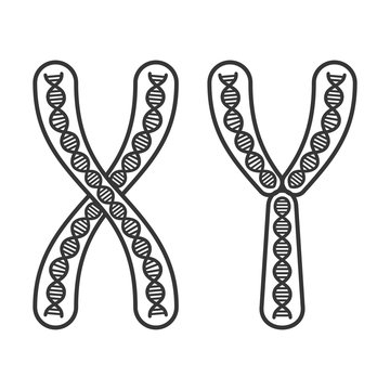 Chromosome X and Y Set on White Background. Vector