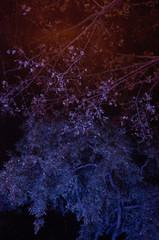 Bäume in frabigem Licht bei Nacht