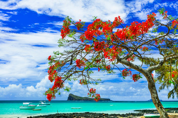 Fototapete - beautiful scenery of Mauritius island -tranquil beach in Cap Malheureux with flamboyant tree