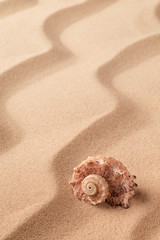 Spiral seashell on tropical beach sand. Sandy background with pattern of lines.