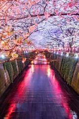 Beautiful night light of Sakura or Cherry blossom season in Tokyo at Meguro river Japan