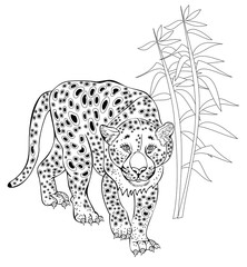 Stylized leopard in jungle. Black and white page for coloring book. Hand-drawn vector image on computer by graphic tablet. Pattern for modern print, embroidery, Henna, Mehndi, tattoo and decoration.