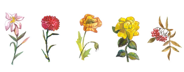 Hand painted floral elements set. Watercolor botanical illustration-Natural objects isolated on white background