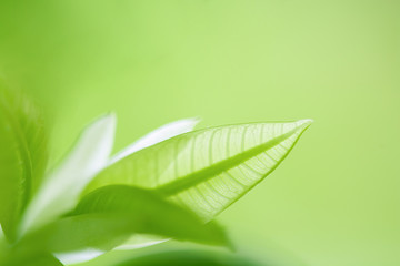 Green Leaves, foliage nature spring background blank for design
