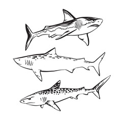 Hand drawn sketch shark set. Vector black ink drawing illustration isolated on white background