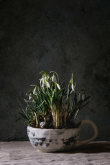 Blossom snowdrops in ceramic mug standing on linen tablecloth in dark room. Spring interior decorations.