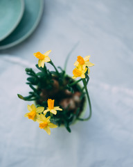 flower daffodils. Spring concept with copy space
