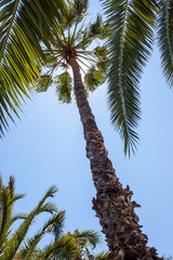 Palm trees under a blue sky. Exotic travel. Copy space