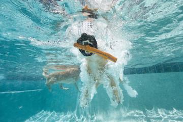Jaws of dog grabbing toy underwater