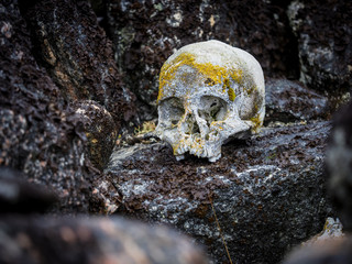 Human skull covered in lichen rests on rock