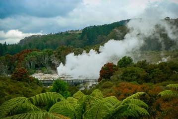 Geyser activity and steam vents at Te Puia geothermal park, Rotorua, North Island, New Zealand