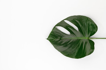 monstera leaf leaves tropical plant botanical nature floraltop view with copy space for your text. flat lay.