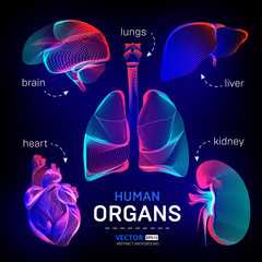 Vector set of different human inner organs contour or wireframe for medical infographics in abstract 3d geometry lines texture and outline gradient waves graphic design illustration on dark background