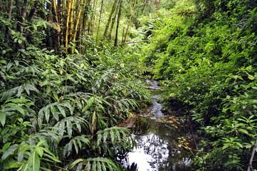 Rain Forest in Hawaii, USA