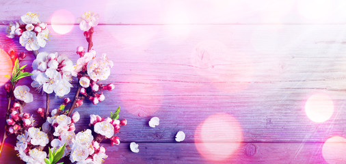 Spring - Trend Colors Palette - Pink Blossoms On Rustic Wood