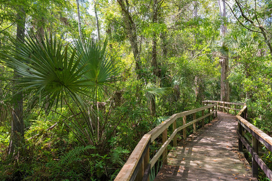 USA, Florida, Copeland, Fakahatchee Strand Preserve State Park, boardwalk through swamp