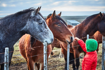 Chile, Tierra del Fuego, Porvenir, boy stroking horses on paddock