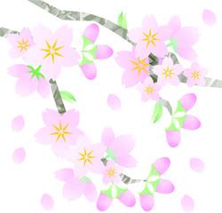 桜花水彩風