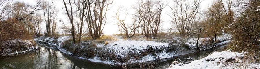 riverside forest at the danube river in austria in winter