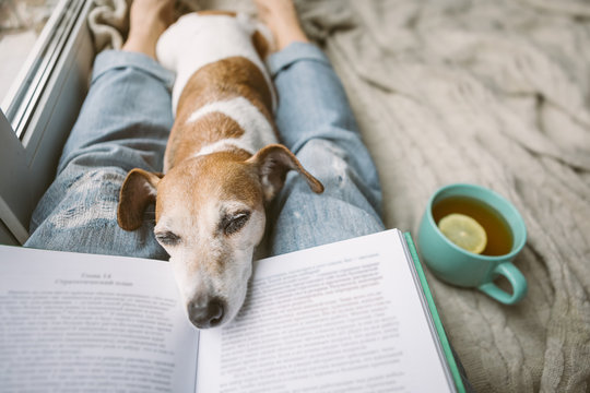 Napping dog and book. Perfest relaxed cozy weekend. Hot tea and interesting book
