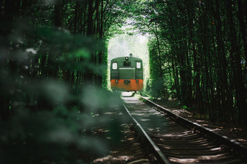 the train goes to the tunnel of love in the summer. green trees