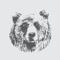 Hand draw sketch of bear - Vector