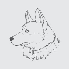 Hand draw sketch of dog - Vector