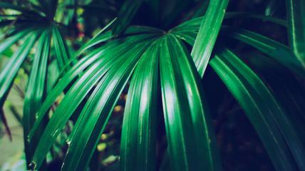 Rainforest in Southeast Asia, Thailand. Sun glare. Lush jungle. Exotic leaves.