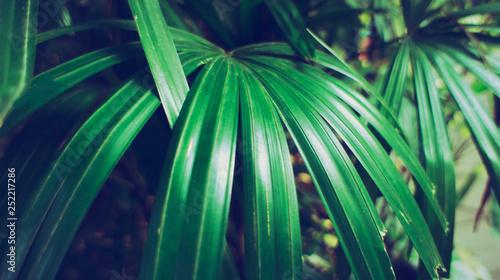 Rainforest in Southeast Asia, Thailand  Sun glare  Lush
