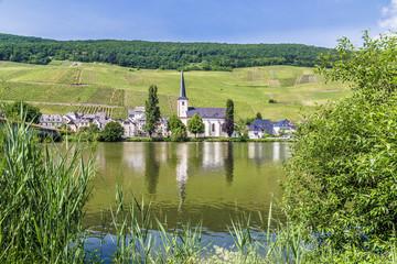 Piesport an der Mosel Rheinland-Pfalz Deutschland