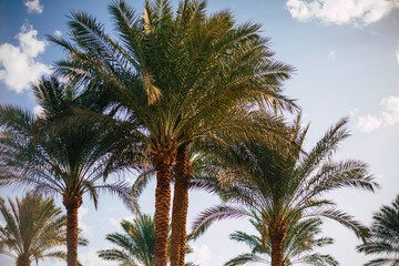 Behind the surface.  A photo of high palm trees and white clouds filled with vivid colours and a perfect composition.
