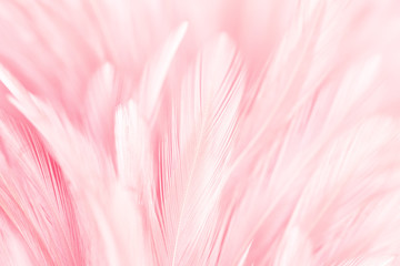 Pink bird feathers in soft and blur style for background and art design