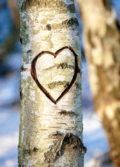 Heart in the tree
