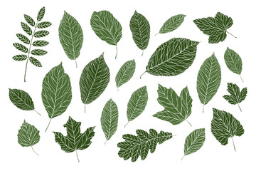 Set of decorative leaves. Nature, summer concept. Vector illustration