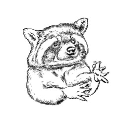Hipster animal raccoon. Hand drawing Muzzle of animal raccoon. Vector illustration for card or poster.